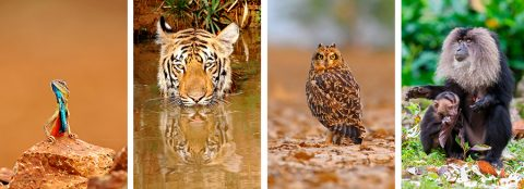 Nature and Wildlife photography blog by Arindam Bhattacharya