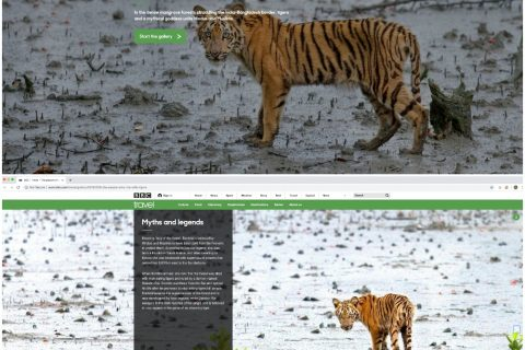 BBC Travel Sunderbans Tiger by Arindam Bhattacharya