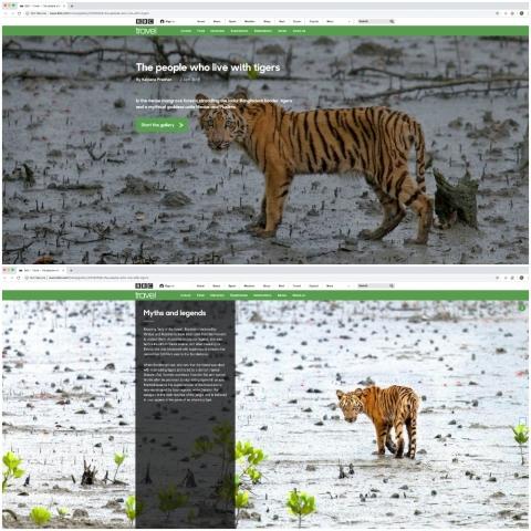 BBC Travel Sunderbans Tiger by Arindam Bhattacharya