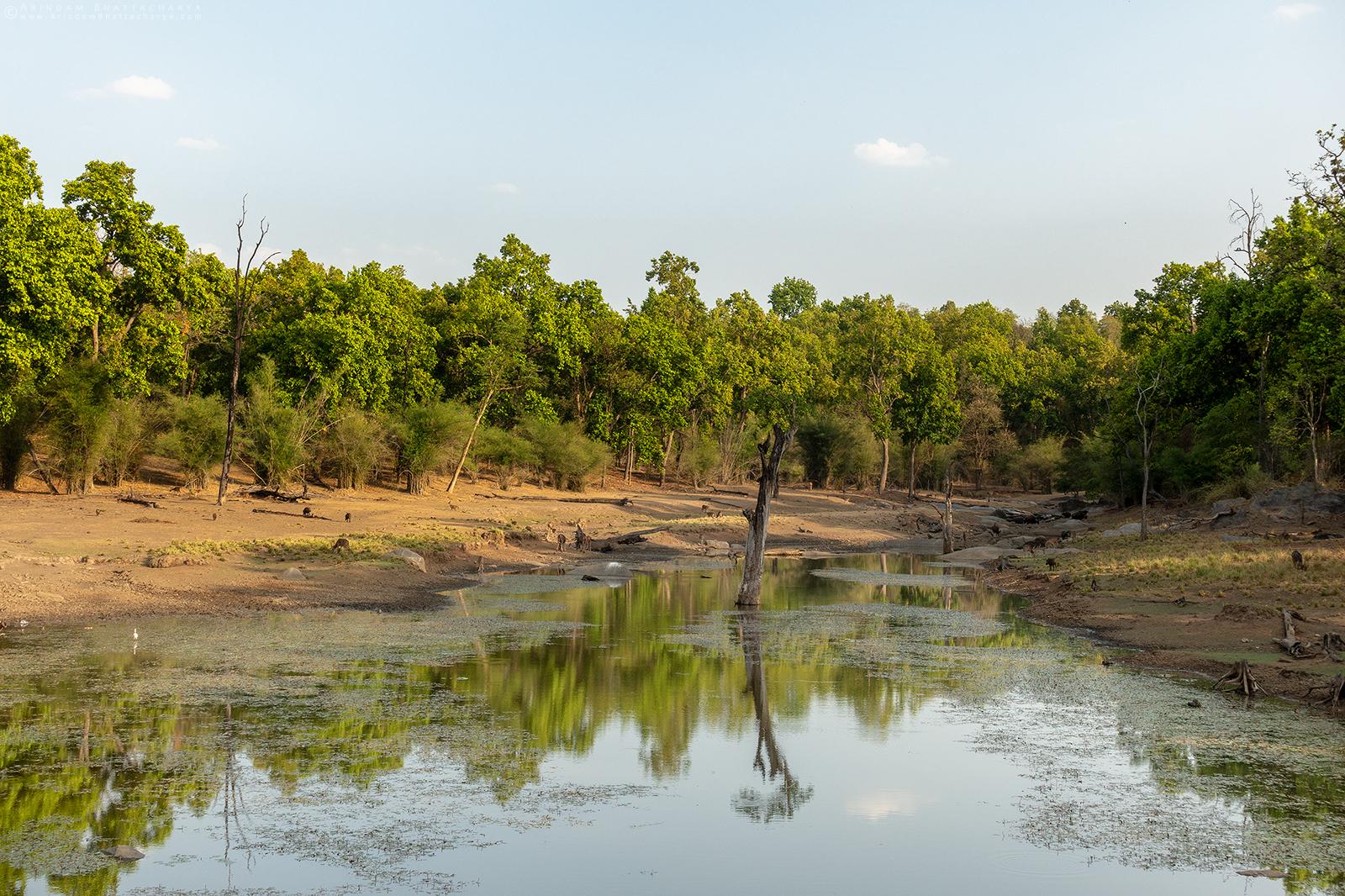 Landscape of Kanha National Park, India's premier tiger reserve in Madhya Pradesh