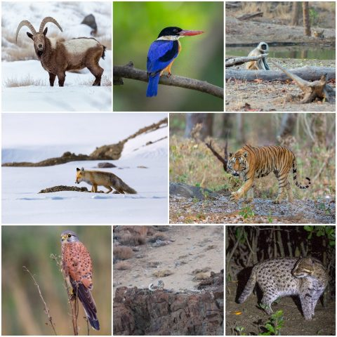 memories of 2019 in photographs by Arindam Bhattacharya