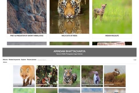 arindam bhattacharya indian nature and wildlife photography